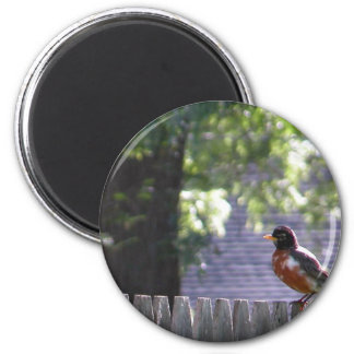 Robin on a fence 2 inch round magnet