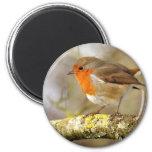 Robin on Branch 2 Inch Round Magnet