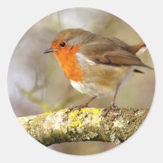 Robin on Branch Classic Round Sticker