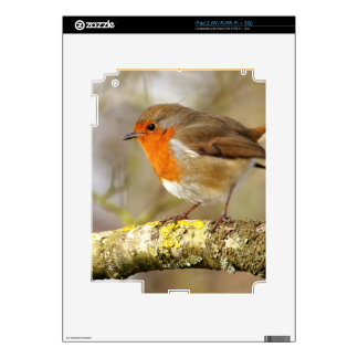 Robin on Branch Decals For iPad 2