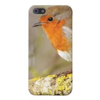 Robin on Branch iPhone SE/5/5s Case