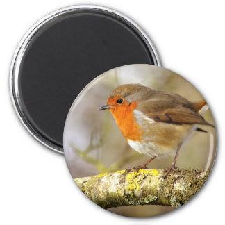 Robin on Branch Magnet