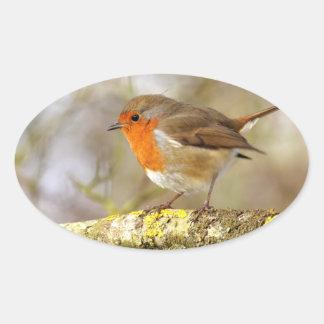 Robin on Branch Oval Sticker