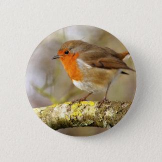Robin on Branch Pinback Button