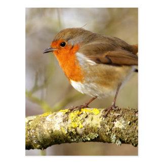 Robin on Branch Postcard