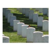 Robin on gravestone post cards