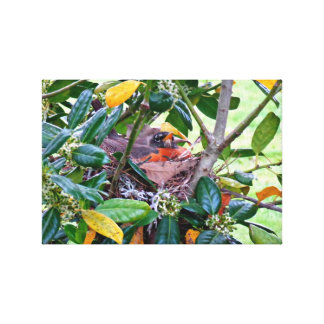 Robin on Her Nest Canvas Print