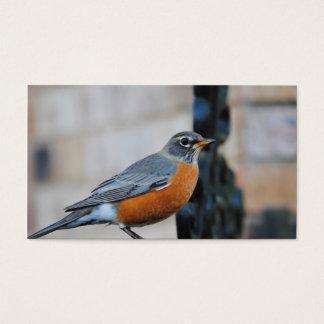 Robin on Ledge Bird Photo Business Card
