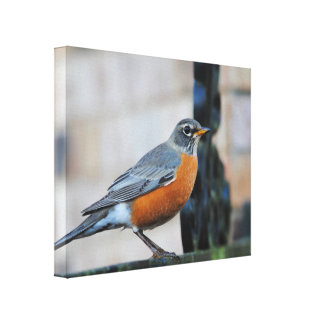 Robin on Ledge Bird Photo Canvas Print