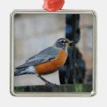 Robin on Ledge Bird Photo Ornament