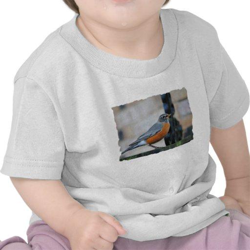 Robin on Ledge Bird Photo T Shirt