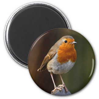 Robin on Post Magnet