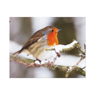 Robin on Snowy Branch Canvas Print