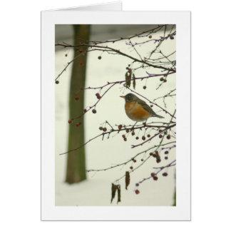 """ROBIN ON TREE BRANCH, SNOW ON GROUND"" (PHOTOG) CARDS"