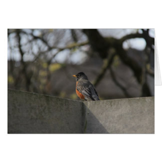 Robin on Wall Greeting Card