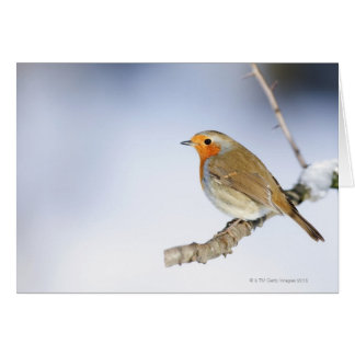 Robin perched on a branch in winter greeting card