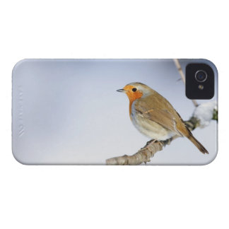 Robin perched on a branch in winter iPhone 4 cover