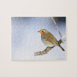 Robin perched on a branch in winter jigsaw puzzles