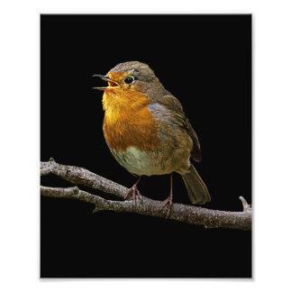 Robin Photo 2