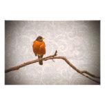 Robin Photo with Damask Swirl Design