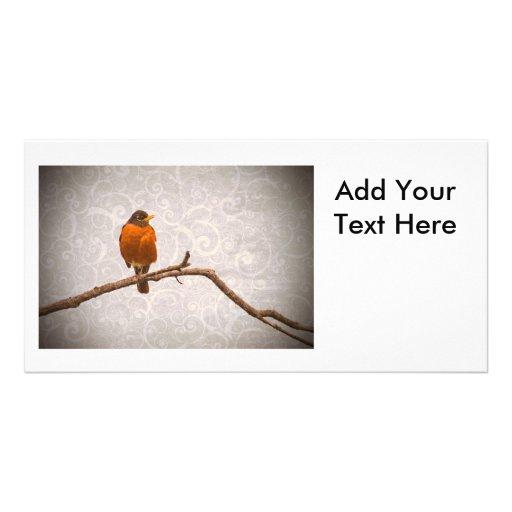 Robin Photo with Damask Swirl Design Custom Photo Card