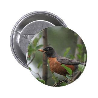 Robin Pinback Button