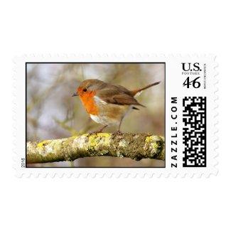 Robin Postage stamp