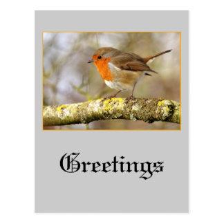 Robin Post Card