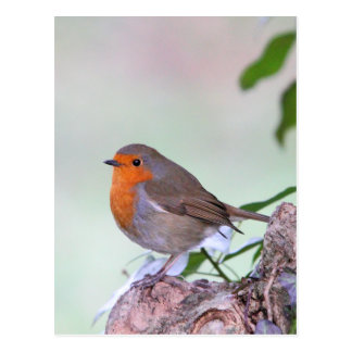 Robin Post Cards