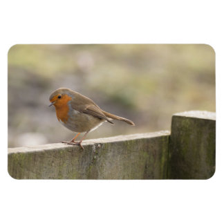 Robin Rectangular Photo Magnet