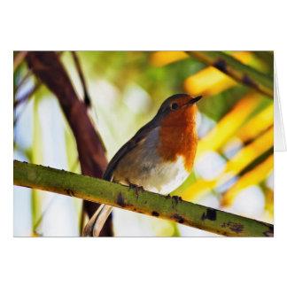 Robin red breast bird card