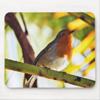 Robin red breast bird mouse pad