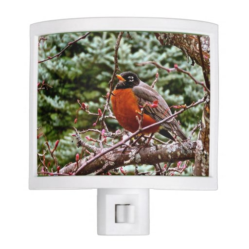 Robin red breast bird night lights zazzle - Birdhouse nightlight ...