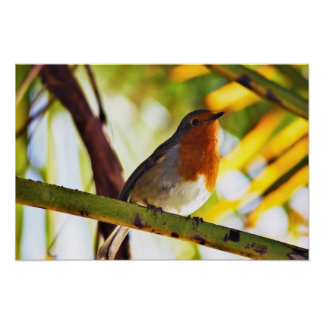 Robin red breast bird poster