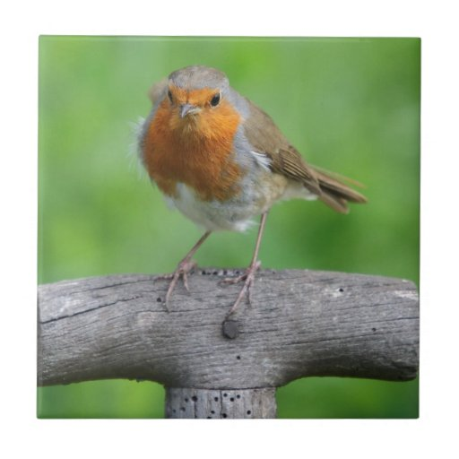Robin red breast ceramic tiles