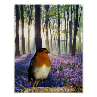 Robin red-breast image for poster