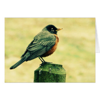 Robin Red Breast on Country Fence Post Greeting Card