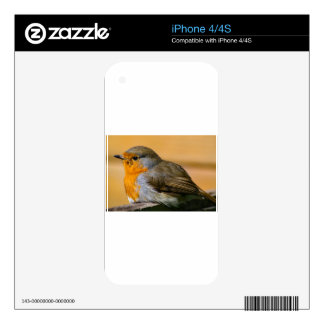 Robin Red Breast. Skins For iPhone 4