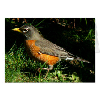 Robin Redbreast Bird Card