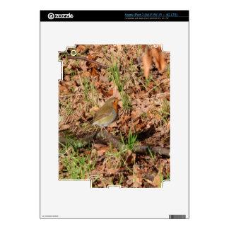 Robin Redbreast Decals For iPad 3