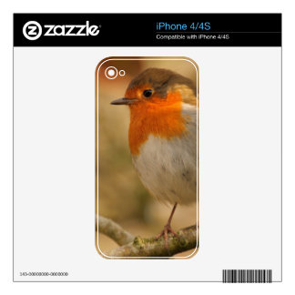 Robin Redbreast in Sunshine Decals For The iPhone 4S