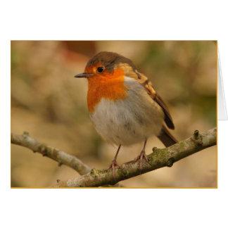 Robin Redbreast in the Sunshine Greeting Card