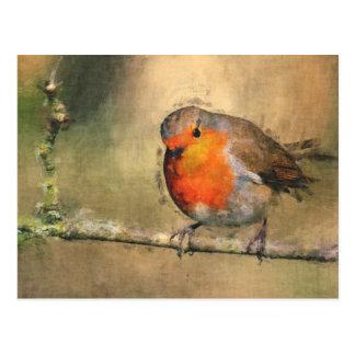 Robin Redbreast Postcard