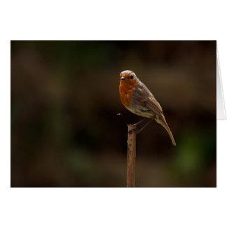 Robin sees a Fly Card
