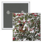 robin sheltering in a holly tree after a snow pinback buttons