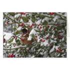 robin sheltering in a holly tree after a snow card