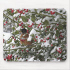 robin sheltering in a holly tree after a snow mouse pad