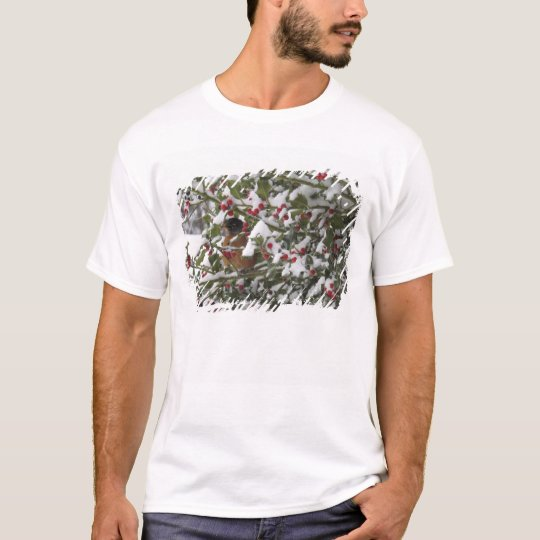 robin sheltering in a holly tree after a snow T-Shirt