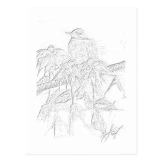 Robin Sketch Postcards