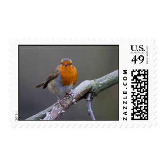 Robin Stamps
